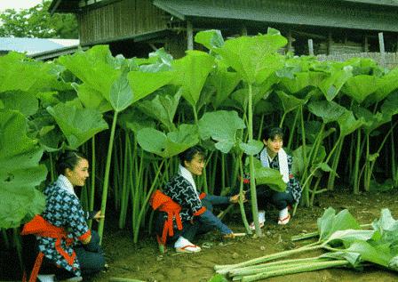 Plante japonaise exterieur photos de conception de for Plantes japonaises exterieur